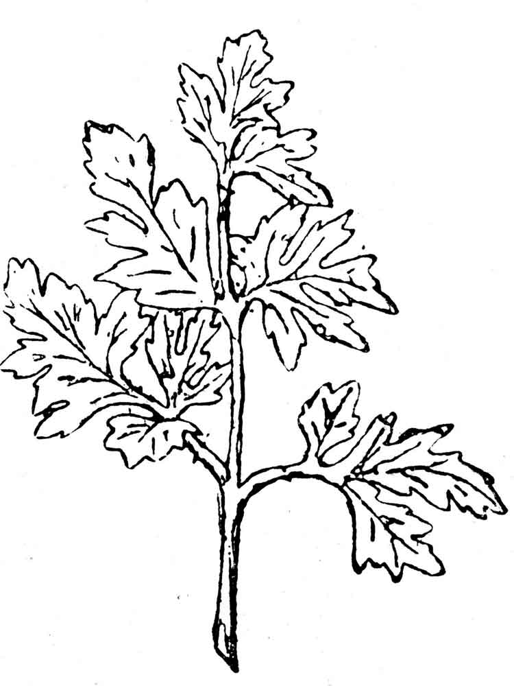 Parsley Coloring Page